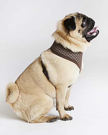 Brown RI Dog monogram print harness